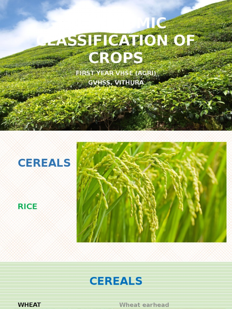 agronomic classification of crops rh scribd com practical manual of agronomy pdf