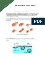 Las Funciones Vitales de Las Células