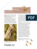 Dragonfly by M. Grunberg and N. Allen