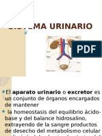 Diapositivas de Sistema Urinario Farmacia