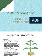 PLANT PROPAGATION GVHSS,VITHURA