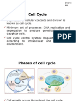 CMP Cell Cycle
