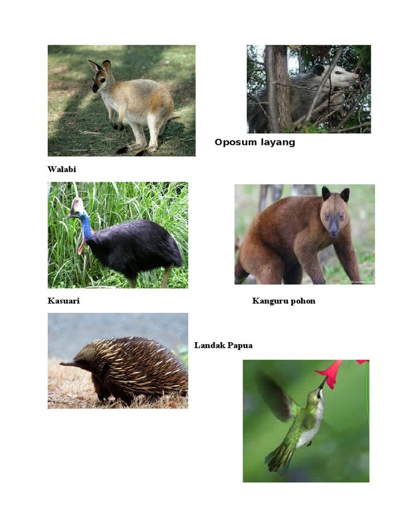 80 Koleksi Gambar Hewan Tipe Australis Terbaru
