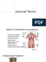 Anatomical Terms.pptx