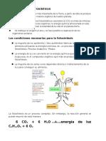 RESUMEN_EL_PROCESO_DE_FOTOSINTESIS_2015 (1).docx