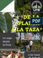 De La Planta a La Taza de cafe
