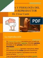 Apart Reproductor