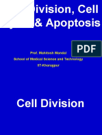 Cell Division, Cell Cycle &  Apoptosis
