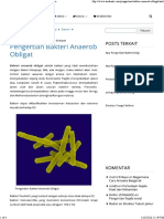 Pengertian Bakteri Anaerob Obligat – Sridianti