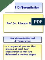 SEX Differentiation by.R.Bundak