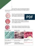 Anatomia Humana