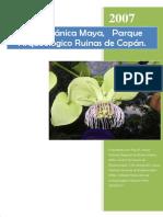 Reporte Etnobotánica Maya Copán PH