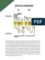 receptores-cannabinoides.pdf