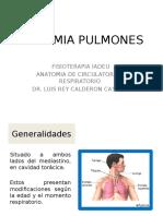 anatomia pulmonar.pptx