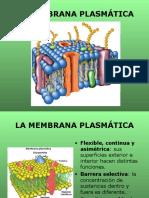 La Membrana Plasmática Pwpnt