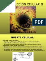 Reproducción Celular II Pwpnt