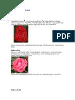 Arti Warna Bunga Mawar