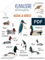 Birds (Joelinnuseire) Poster
