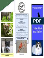 CatsIndoors Spanish