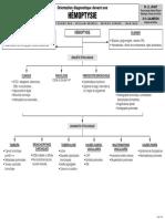 Pneumologie internat resumé