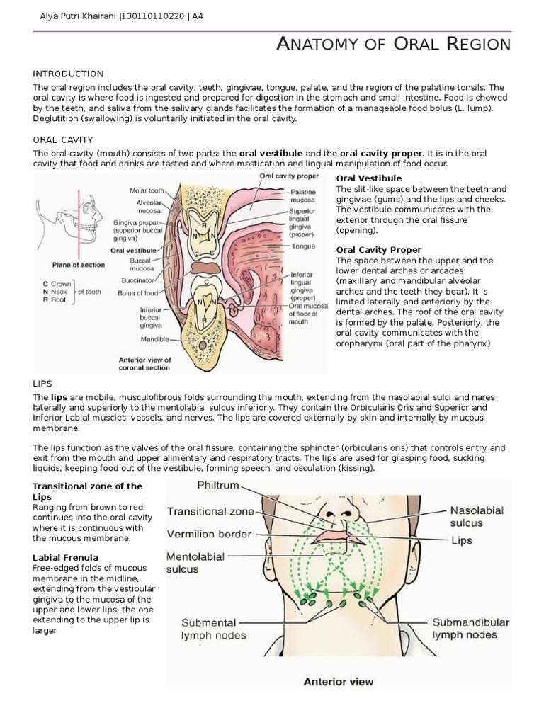 Wunderbar Anatomy Of Oral Cavity Ppt Fotos - Menschliche Anatomie ...