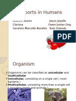 IGCSE Biology Transport in Humans summary