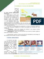 1.2.1 - Ficha Informativa - Cadeias Alimentares