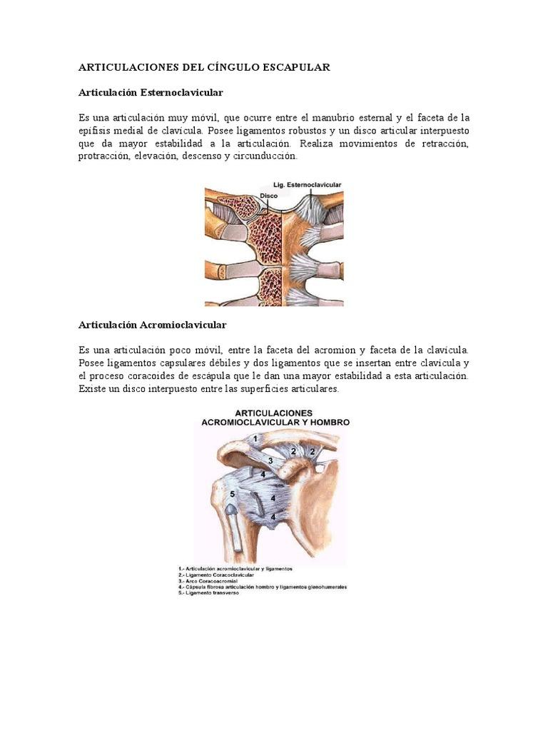 Articulaciones Del Cíngulo Escapular