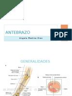 Antebrazo.pptx