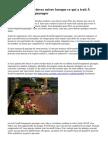 Conseils que vous devez suivre lorsque ce qui a trait à l'aménagement paysager