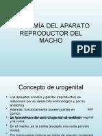 Aparato Reproductor Del Macho