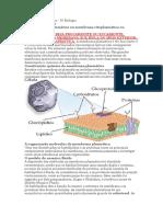 1.1 Membrana Plasmática