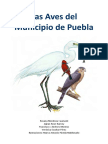 Aves Del Municipio de Puebla