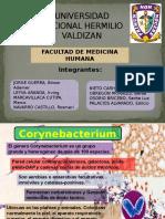 Corynebacterium, Vibrio y Aeromonas