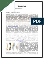 Anatomía, Clasificacion y Cortes Anatómicos