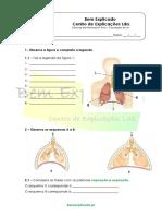 A.3.3 Sistema Respiratório Humano Ficha de Trabalho 1