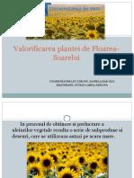Utilizarea Deseurilor Rezultate Din Prelucrarea Plantei de Floarea Soarelui.stoian Larisa