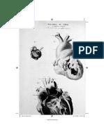 Rapto-Higea-Present-Introd-autor-22pg.pdf
