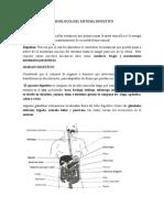 Tema 7 Fisiolg Del Sistema Digestivo