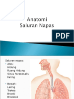 Anatomi Saluran Napas