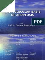 Apoptosis & Ros Prof Pur