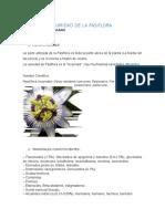 SUMIDAD DE LA PASIFLORA.doc