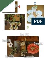 Projecto de turma - fotos da germinação do feijão