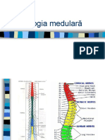 Patologia Medulara 1