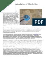 A. Limpieza De Alfombras En Seco In Viña Del Mar, Etchevers 440