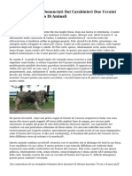 Citta' Di Castello, Denunciati Dai Carabinieri Due Ucraini Per Maltrattamento Di Animali