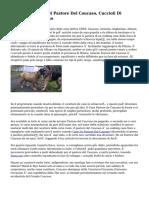 Annunci Cuccioli Di Pastore Del Caucaso, Cuccioli Di Pastore Del Caucaso