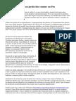 Comment cultiver un jardin bio comme un Pro