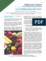 Etileno en la Maduración de Frutos