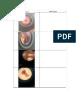dokumentasi mikroskop